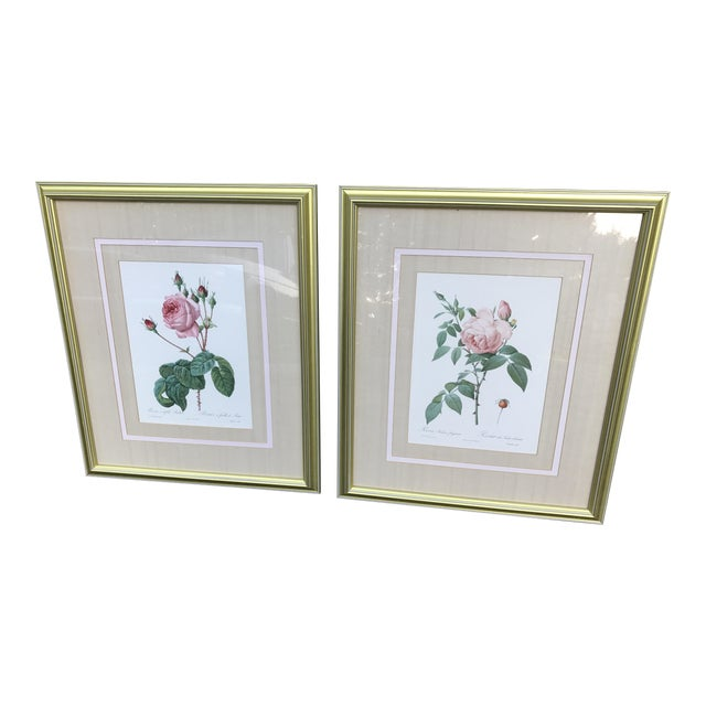 Pierre Joseph Redoute Botanical Rose Large Lithographs - a Pair For Sale
