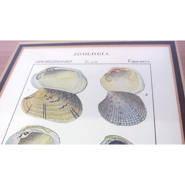 Pair of Vintage Latin Conch Shell Botanicals - Image 6 of 9