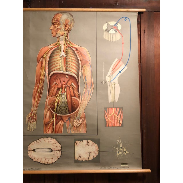 1960s 1960s Vintage Hagemann for Denoyer-Geppert German Human Nervous System Pull-Down Chart For Sale - Image 5 of 10
