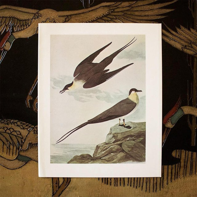 1960s Long-Tailed Jaeger by John J. Audubon, Vintage Cottage Print For Sale - Image 5 of 8