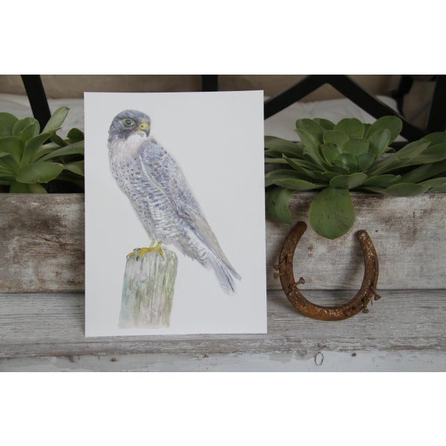Peregrine Falcon - Print of an Original Watercolor - Image 2 of 2