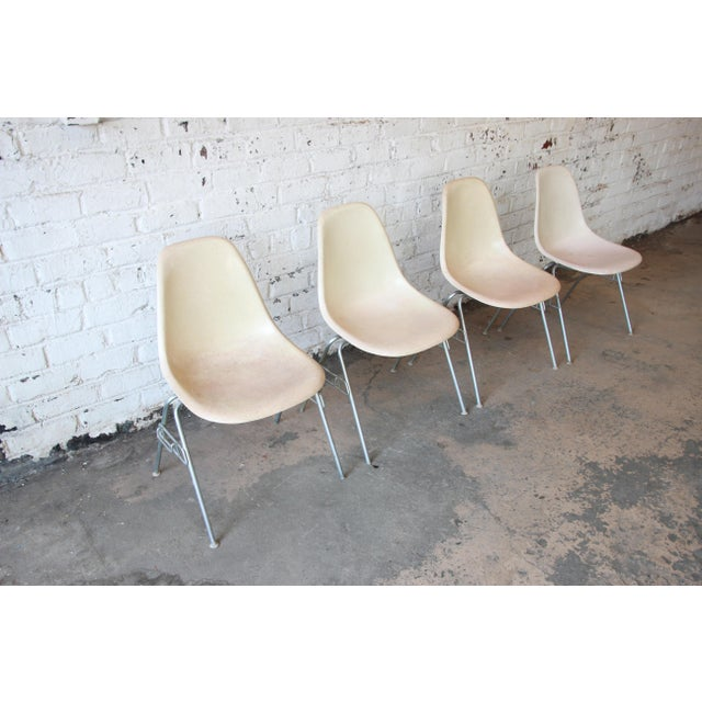 Charles Eames for Herman Miller DSS Stacking Chairs in Parchment - Set of 4 - Image 3 of 9