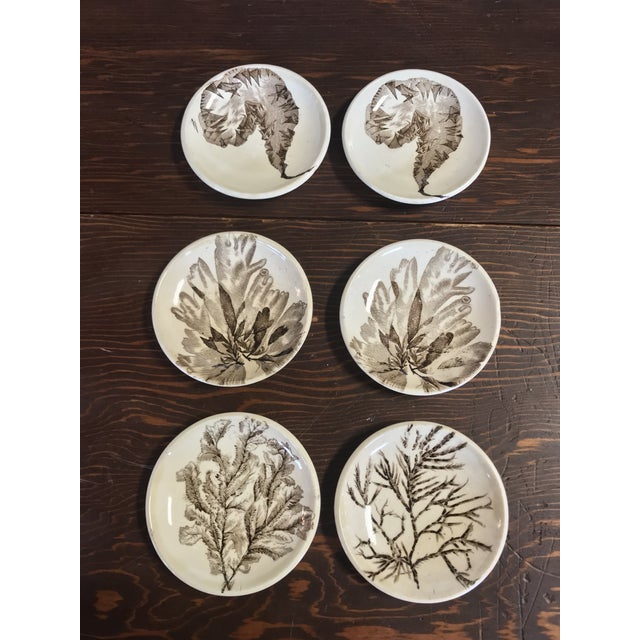 Six R 19th Century Brown Transferware Butter Pats by Wedgewood, Seaweed Pattern. More pieces available upon request.