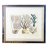Image of Vintage Mirrored Framed Colored Print With Coral Motifs by Trowbridge For Sale