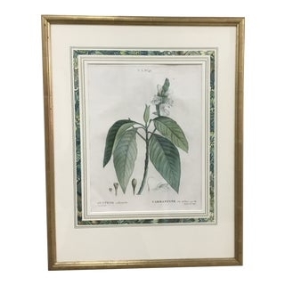 Late 19th Century French Botanical Lithograph Print For Sale
