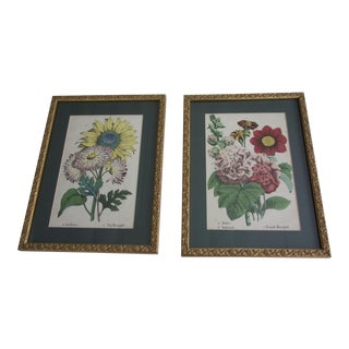 Late 19th Century English Framed Floral Prints - a Pair For Sale