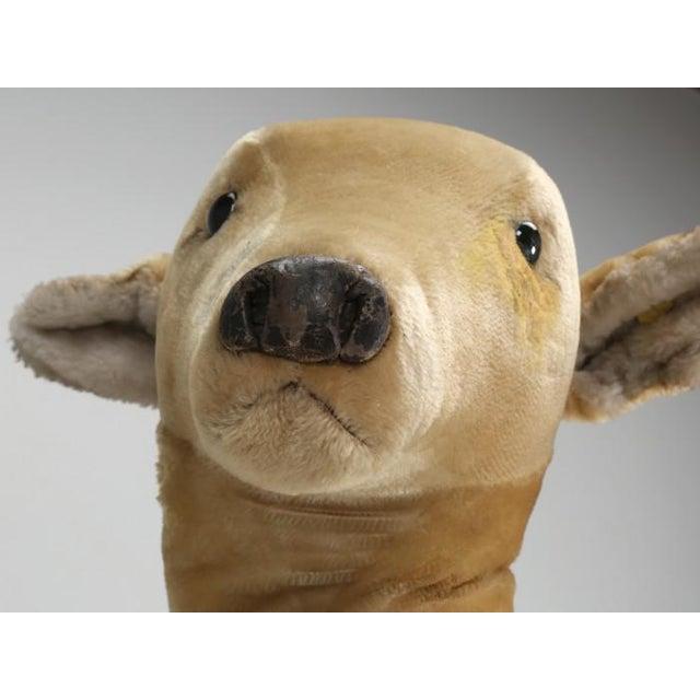 """White 1963 Steiff Mohair Fallow Deer """"Studio Animal"""" For Sale - Image 8 of 13"""