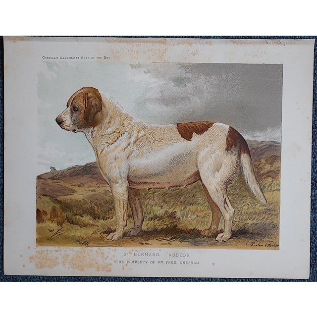 """English Traditional Antique Dog Lithograph """"St. Bernard"""" For Sale - Image 3 of 3"""