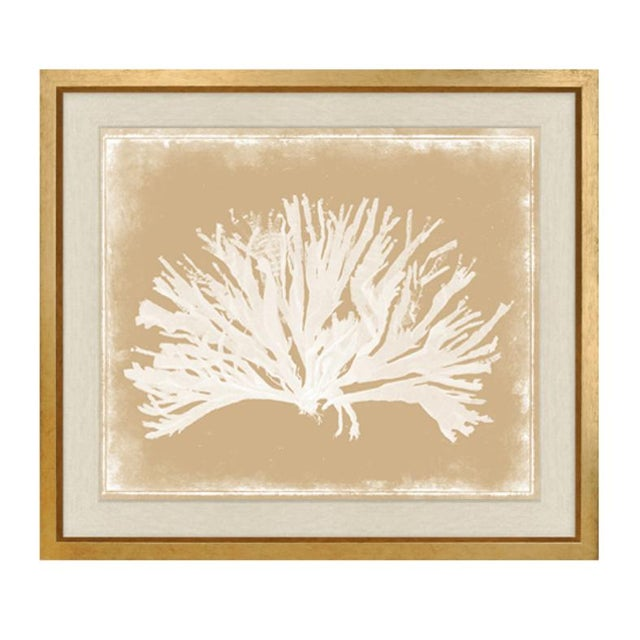 "Trowbridge ""Coloured Corals"" Prints Set of Three For Sale - Image 4 of 7"