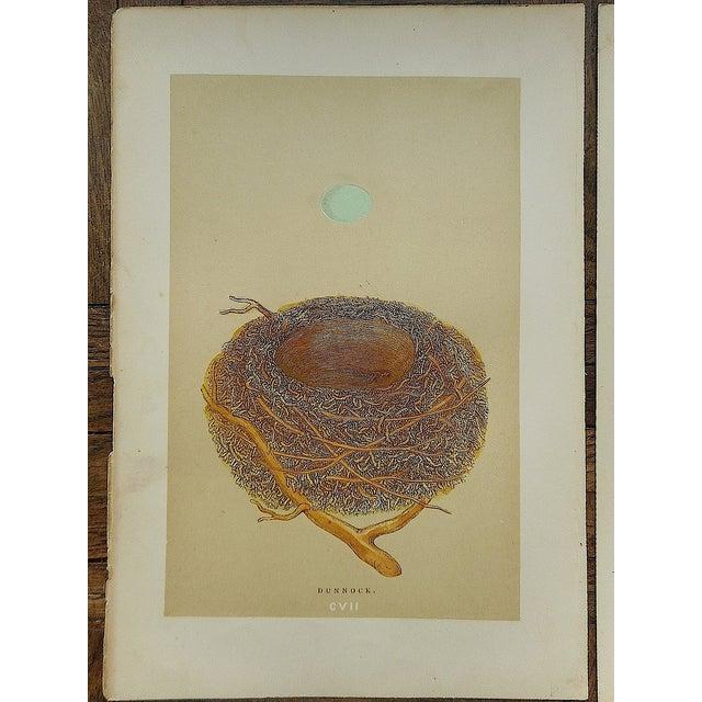 Antique Morris Nest & Egg Prints - Set of 4 - Image 3 of 6