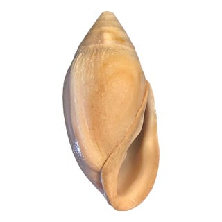 Athleta Glabrata Glazed Seashell
