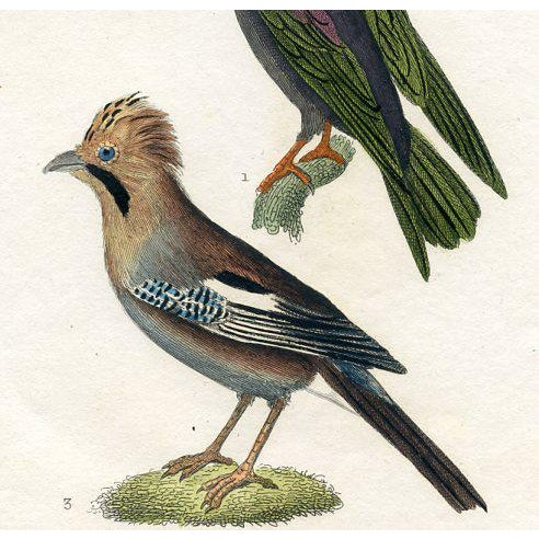 Richly hand-colored and detailed bird print of the Magpie, Jay and Chough. From a 1830s edition of Georges Buffon's...