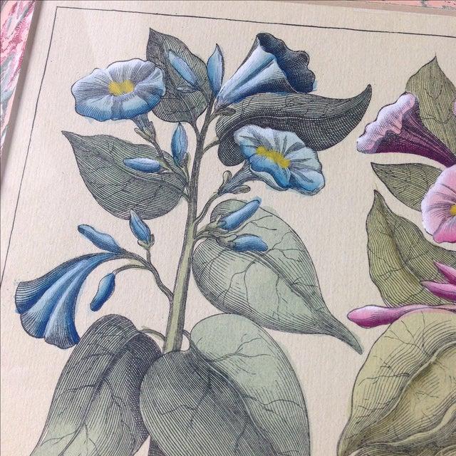 Vintage John Richard Botanical Print - Image 8 of 11