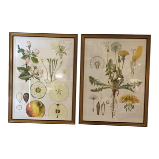 Contemporary Oversized Botanical Drawings - A Pair For Sale
