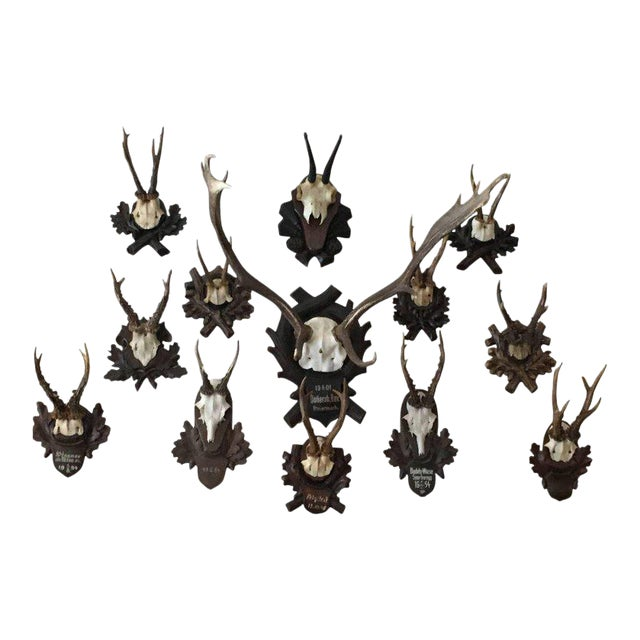 Collection of Black Forest Mounts Including One Stag, Ten Roe and One Chinois For Sale