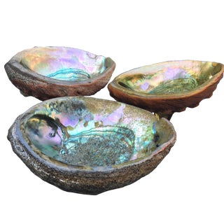 Large Abalone Iridescent Shell Bowls - Collection of 3 For Sale
