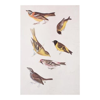 Cottage Style Vintage Print of Birds of America by John James Audubon For Sale