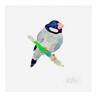 Giclee Print of Finch For Sale