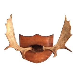 Vintage Moose Antlers on Plaque