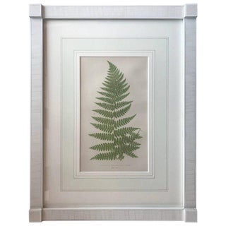 19th Century French Fern Lithograph For Sale