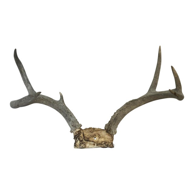 Vintage Natural Deer Rack For Sale