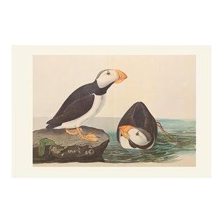 1966 Large-Billed Puffins by John James Audubon, XL Vintage Print For Sale