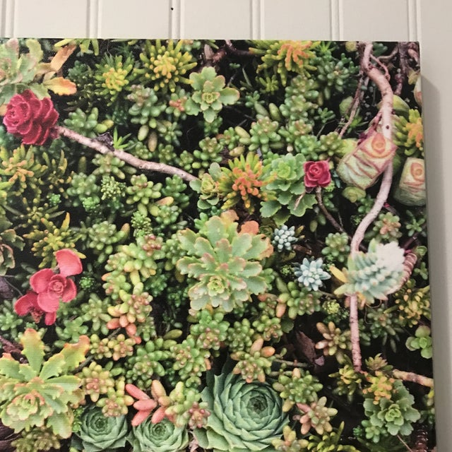 """Contemporary """"Succulents"""" Photograph on Canvas For Sale - Image 3 of 10"""