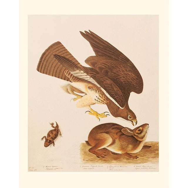 Printmaking Materials Swaison's Hawk, Marsh Hare and Horned Agarma by Audubon, Vintage Cottage Print For Sale - Image 7 of 9