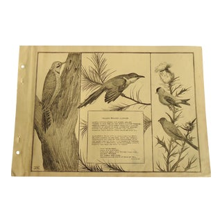 1930 Art Deco Yellow Billed Cuckoo Print Character Culture Citizenship Guides For Sale