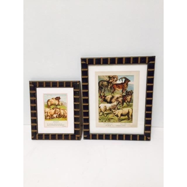 Lovely sheep and ram prints with beautiful carved wood frame. In great vintage condition with great color and graphics....