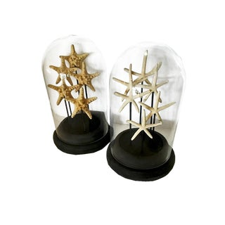 Pair of Glass Cloches With Starfish For Sale