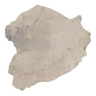 Large Conch Shell