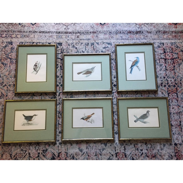 18th C. English Bird Prints in Matching Frames - Image 2 of 12