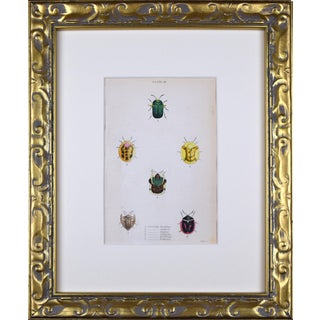 19th Century Hand Colored Entomology Engraving of Beetles For Sale