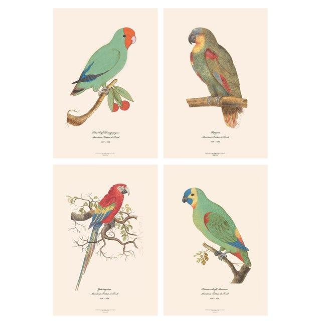 XL 1590s Contemporary Prints of Anselmus Boëtius De Boodt Parrots - Set of 4 For Sale