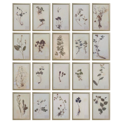 Tan Framed Herbarium Plant Specimens From 1932 - Set of 20 For Sale - Image 8 of 8