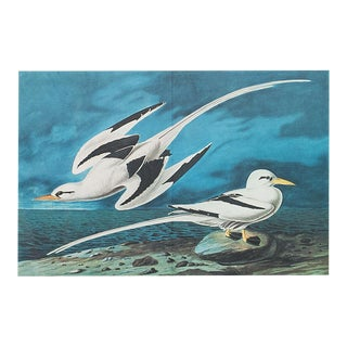 XL Vintage Lithograph of White-Tailed Tropic Bird, 1966