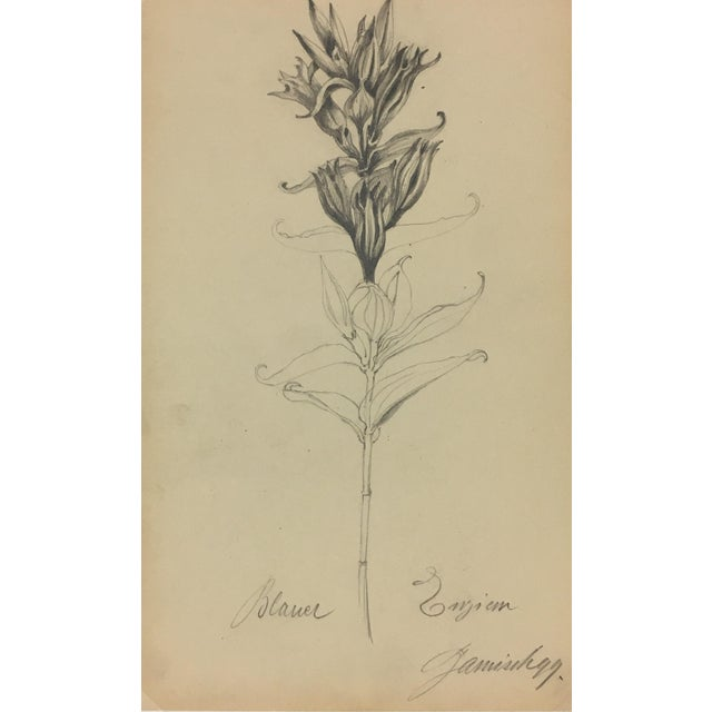 Traditional Flower Sketch - E. Wollenweber, 1890 For Sale - Image 3 of 4