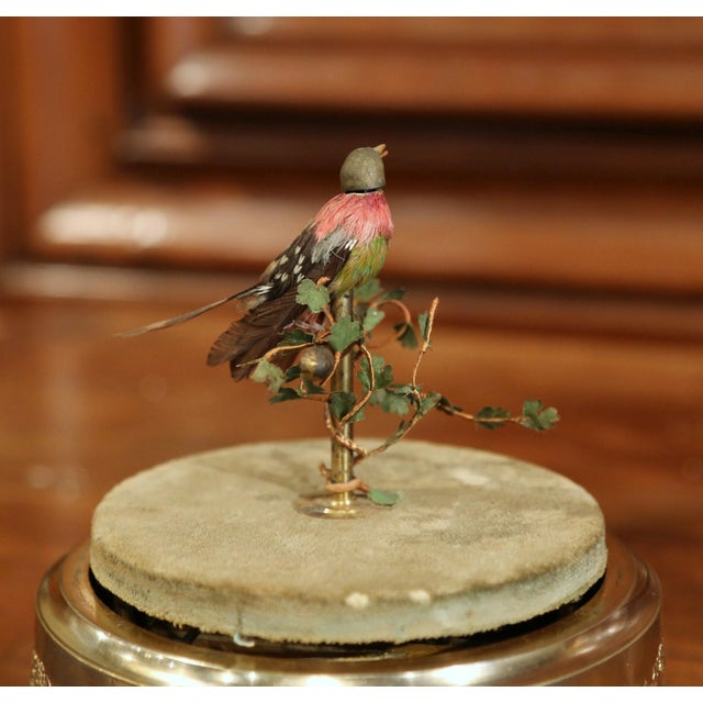 19th Century French Automaton Singing Bird in Brass Cage For Sale - Image 9 of 13