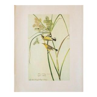 1966 Vintage Cottage Print of Prairie Warbler by Audubon For Sale