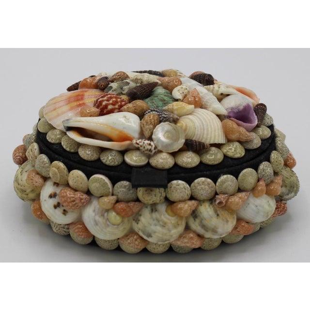 Mid 20th Century Vintage Organic Seashell Jewelry Treasure Box For Sale - Image 11 of 12