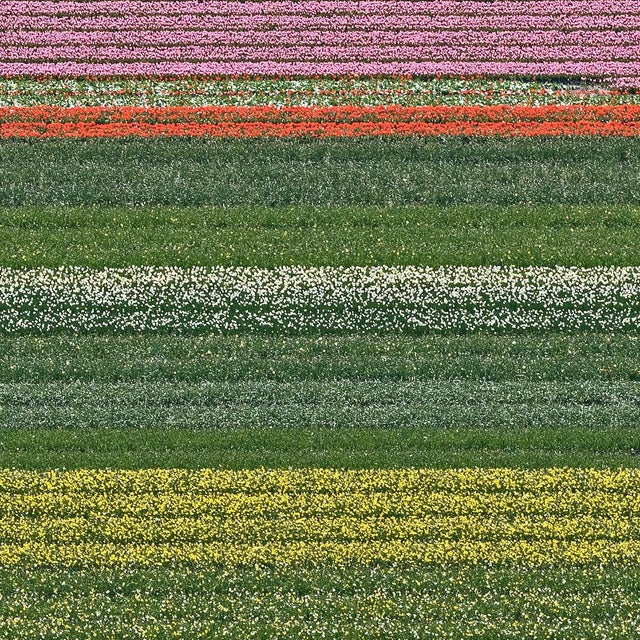 """""""AV_Tulip_Fileds_014"""" Contemporary Limited Edition Fine Art Photograph Print by Bernhard Lang For Sale - Image 4 of 7"""