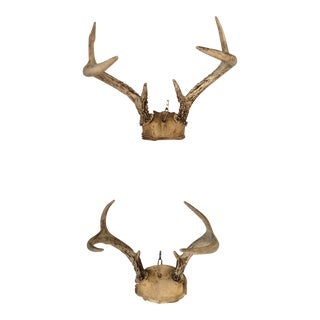 Vintage Six Point Deer Antlers - a Pair For Sale