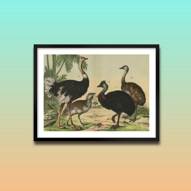 Vintage Ostrich & Friends Archival Print For Sale - Image 4 of 5