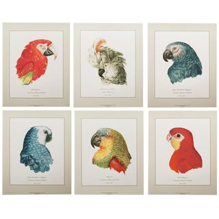 Anselmus De Boodt & Aert Shoumann, 16-18th C. Parrot Head Study Prints - Large Set of 6 For Sale