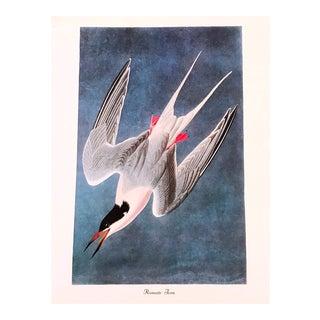 Vintage John James Audubon Roseate Fern Bird & Botanical Print For Sale