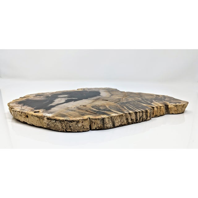 Polished Petrified Wood Tray For Sale - Image 12 of 13