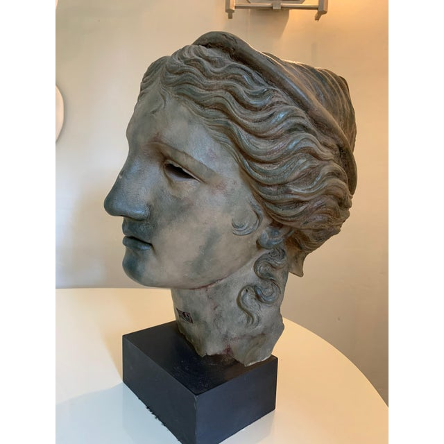 Bust of Adonis, From the British Museum Gift Shop For Sale - Image 9 of 13