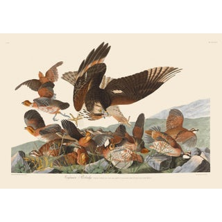 John James Audubon Print, Virginian Partridge For Sale