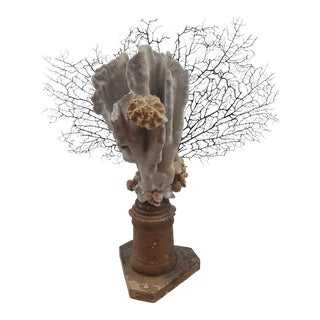 Antique Sea Coral Specimen on 18th Century French Altar Stick For Sale